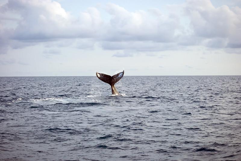 Baleia em Praia do Forte